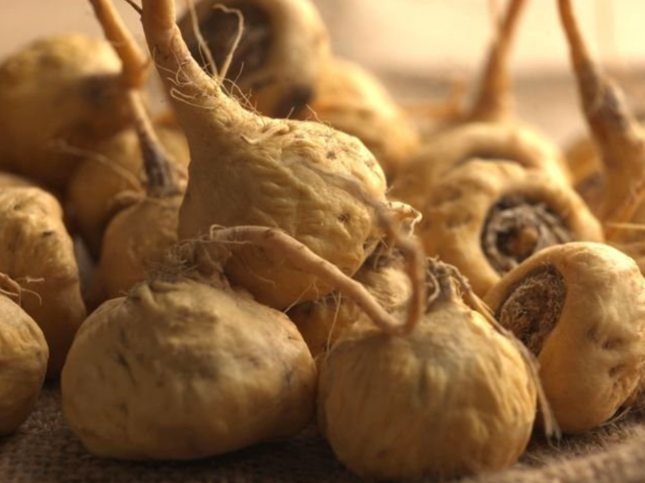 organic maca root benefits